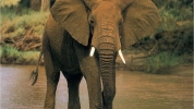 Elephants / Project Based Learning