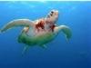 Shamu TV's Saving  A Species:  Sea Turtles