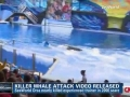 SeaWorld Releases Video of 2006 Killer Whale Attack