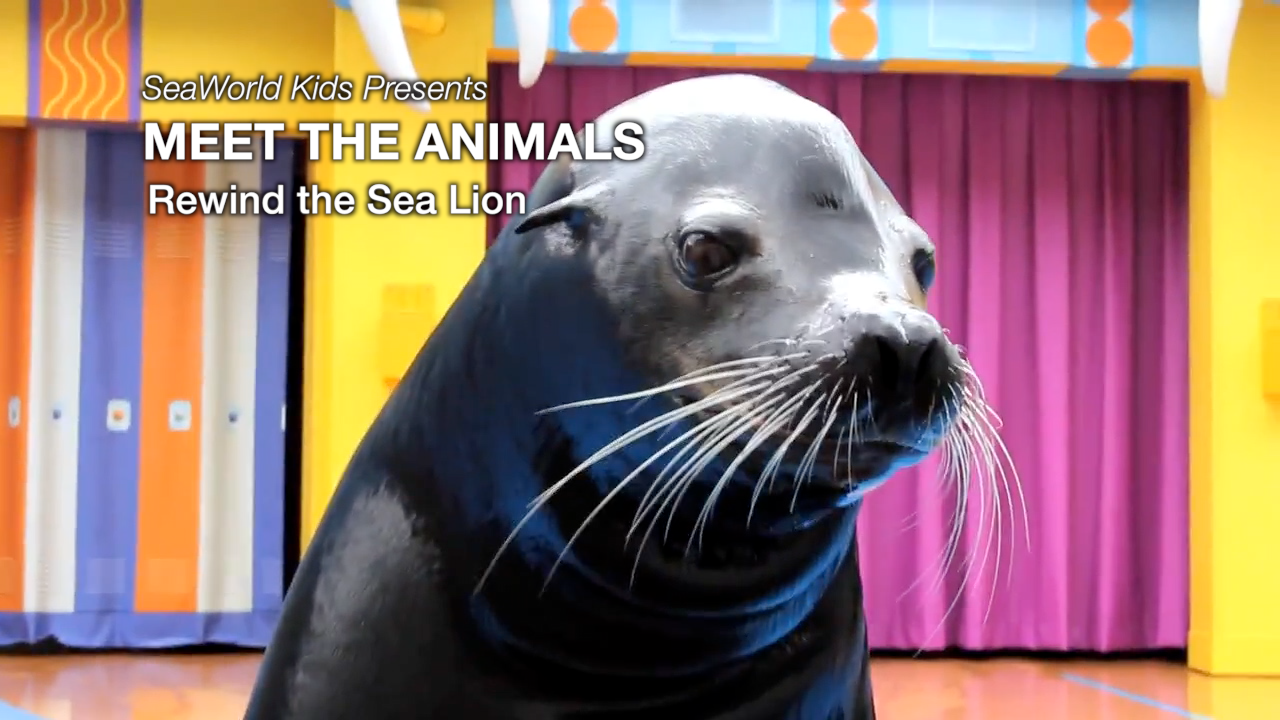 SeaWorld Kids—Meet the Animals—Rewind, The Sea Lion
