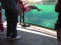 Little Girl and Sea Lion play tag