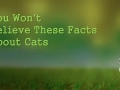 You Won't Believe These Facts About Cats