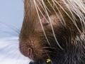 World's Largest Porcupine