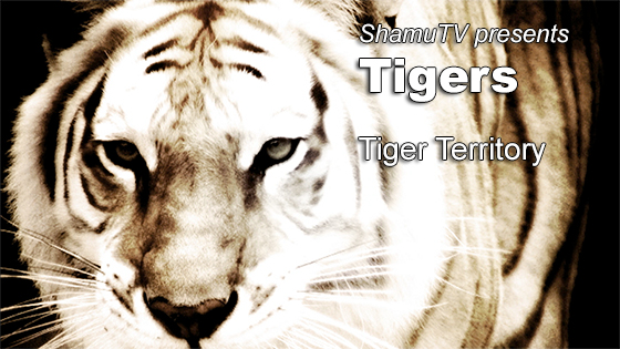ShamuTV's Saving A Species: Tigers