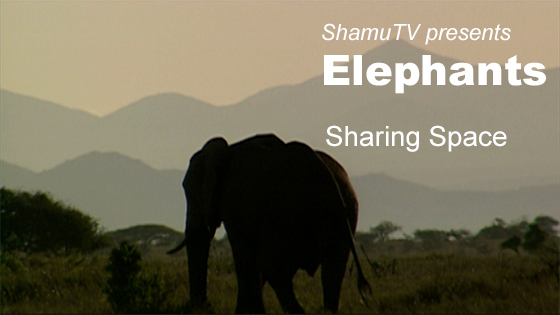 ShamuTV's Saving A Species: Elephants