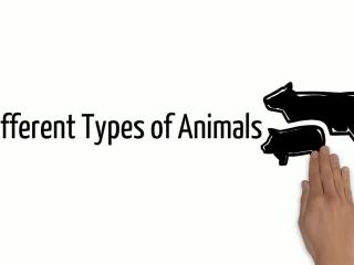 Different types of animals - mysimpleshow