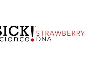 Strawberry DNA Lab