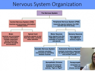 Autonomic and Somatic Systems