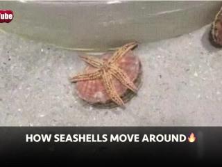 How Seashells Move Around