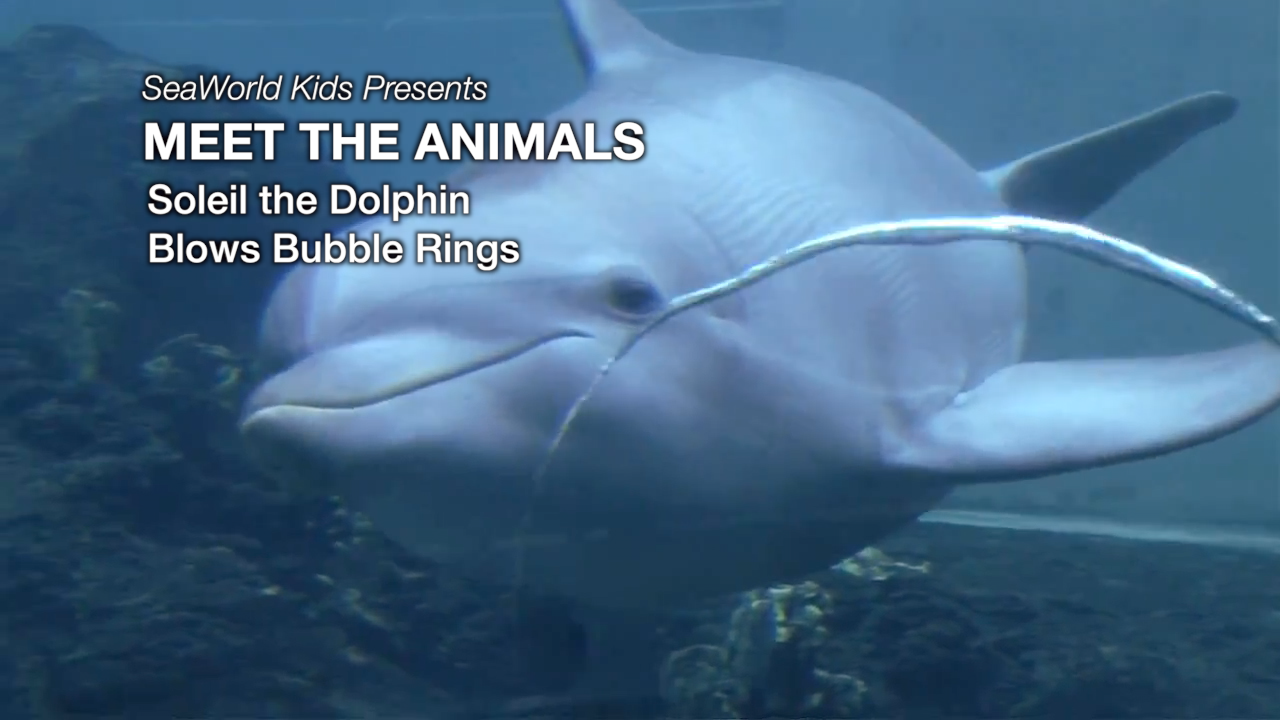 rings bubble watch underwater cool youtube