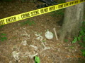 Forensic-Anthropology-forensic-anthropology-6380454-2560-1920