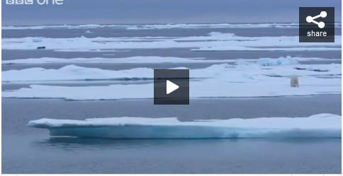 Polar Bear Stalking