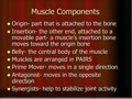 HS1 Muscle Actions