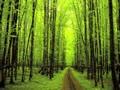 Woodland Shrubland Biome