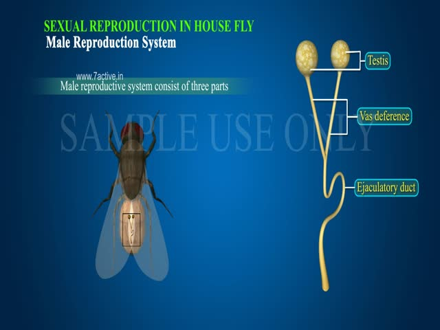 sexual reproduction in fl