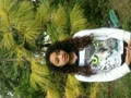 Dade Yellow Pine 031014 204