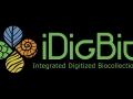 Digitizing Biological Collections – Imaging Fluid-Preserved Specimens
