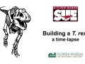 Building a T. rex: a time-lapse