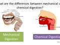 Mechanical v Chemical Digestion