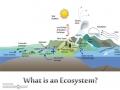 Ecosystem Objective #1