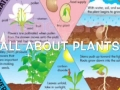 All About Plants by Mrs. Graham's First Grade Class (Sheridan)