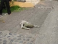 Sloth Crossing the Road