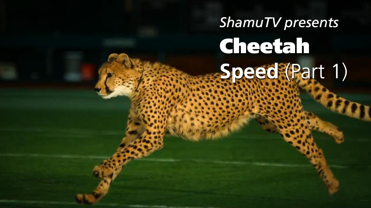 Shamu TV - Cheetah Speed