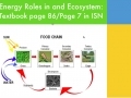 Energy Roles in an Ecosystem