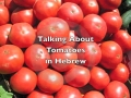 How to say Tomatoes in Hebrew