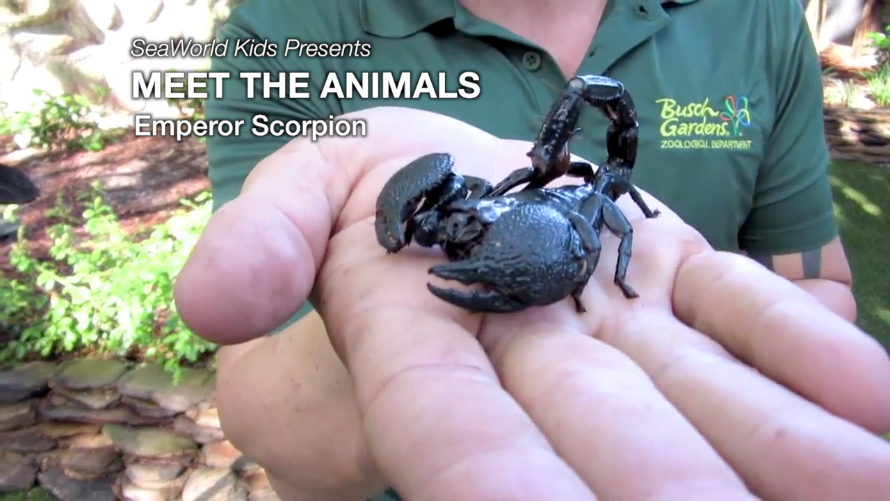 SeaWorld Kids—Meet the Animals—Emperor Scorpion