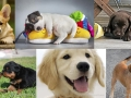 How your dog can protect you before you're born