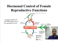 The Role of Hormones in the Female Reproductive System