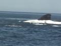 The Right Whale: Urbanizes