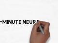 2 Minute Neuroscience: The Neuron