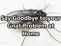 Say Goodbye to your Gnat Problem at Home