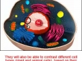 Cell Structure and Function [Science Nspired Preview Video]