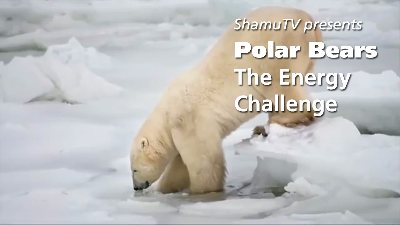 Shamu TV: Polar Bears - The Energy Challenge