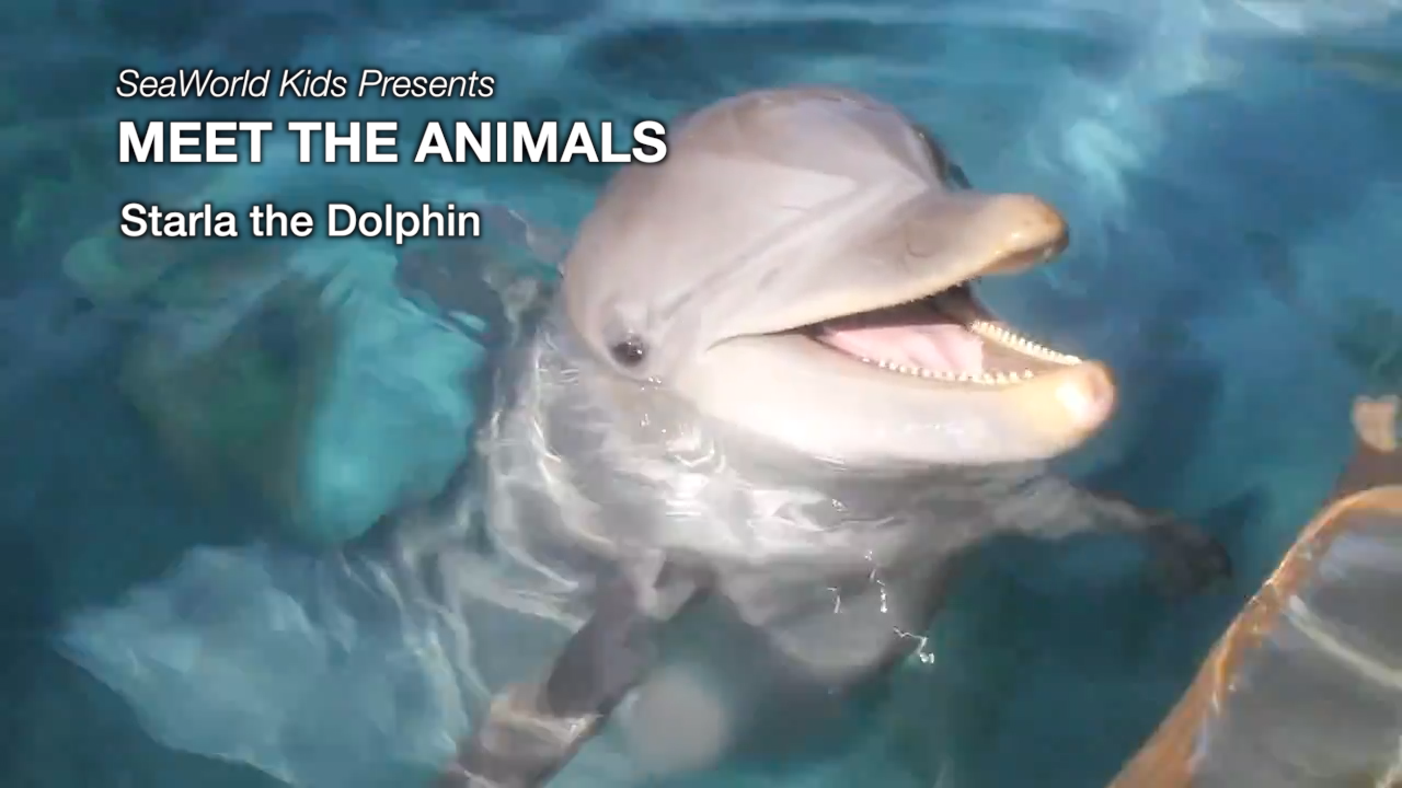 SeaWorld Kids—Meet the Animals—Starla the Dolphin