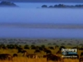 Food Web & Chains Documentary - The Discovery Channel