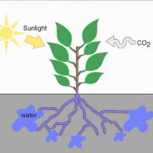 photosynthesis rap song Can some write me a photosynthesis song or poem i need it asap and please dont use one that has already been made itneeds to be original and all ideas are good ideas help please 10 ptz for the winner.