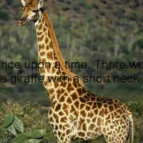 how the giraffe got his long Anthony lydgate examines why the giraffe has confused observers over the  centuries, and what a new study tells us about its long neck.
