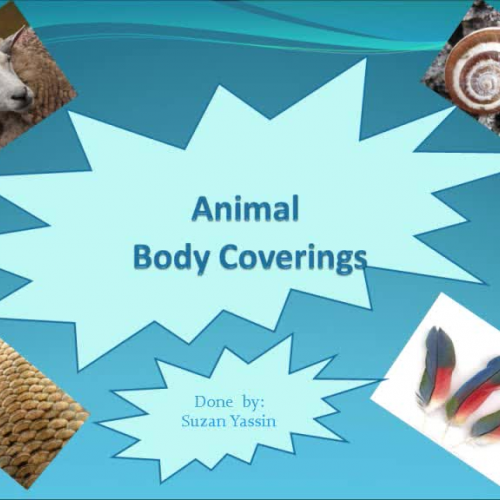 Worksheet Works Body Coverings : Animal body coverings