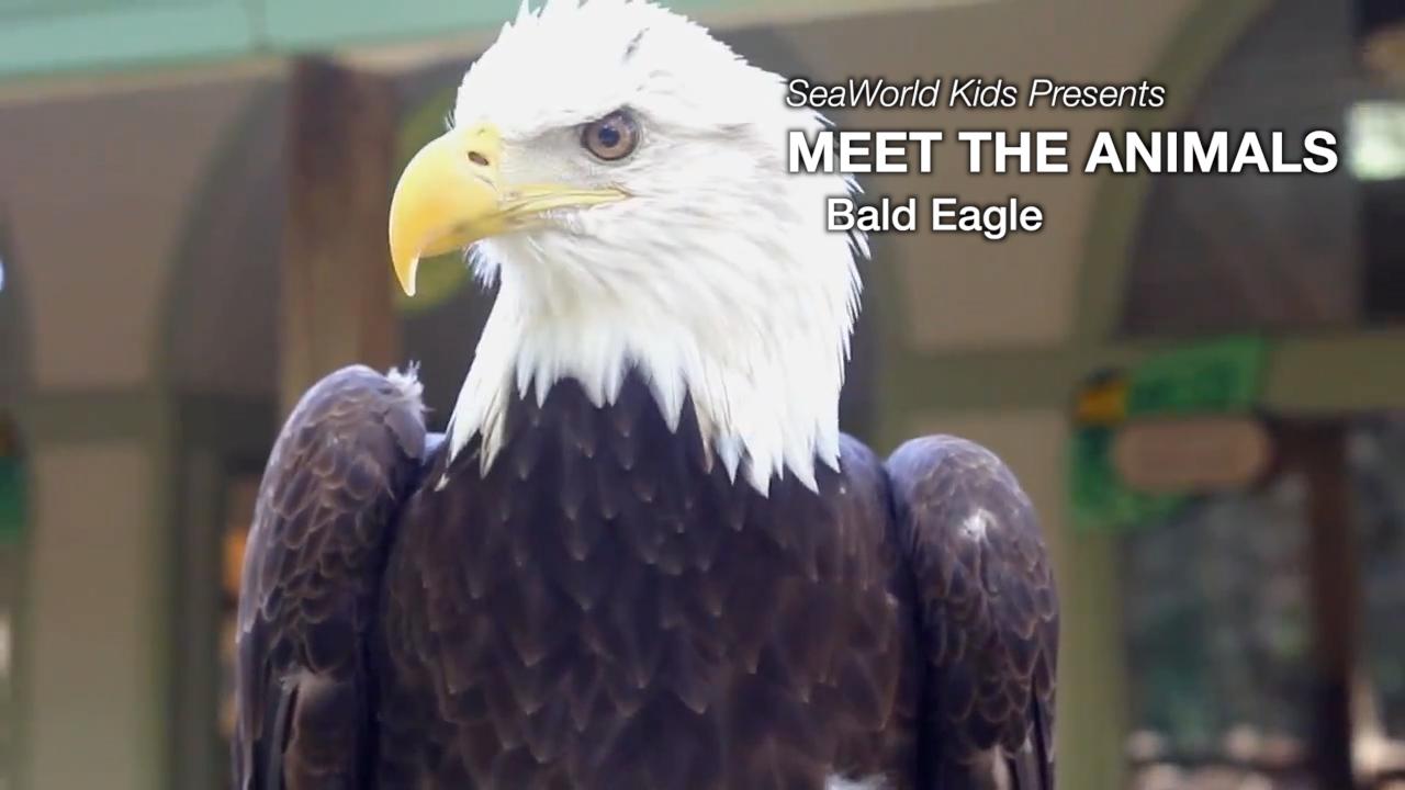 SeaWorld Kids Meet the Animals Bald Eagle TeacherTube