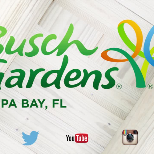 Roller Coaster Design 101 At Busch Gardens Tampa
